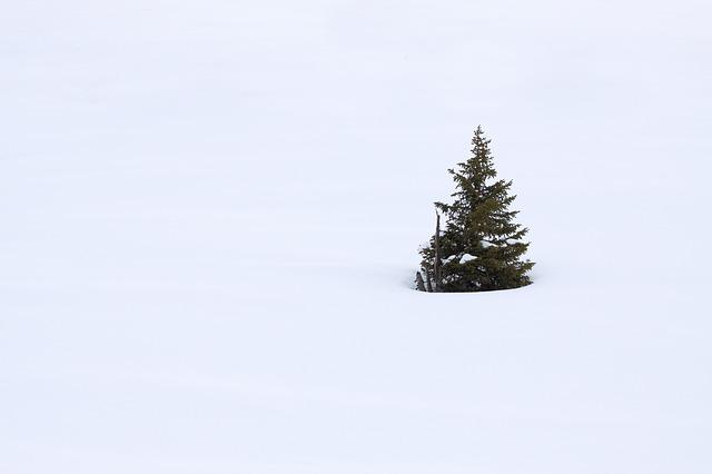Strom Snih Prosinec