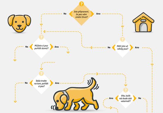 Pořizujeme psa: na co se připravit?