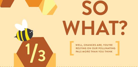 Proč zachránit včelky? – Infografika