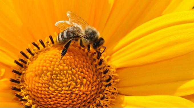 Hledáme Včelího Obsahového Stratéga