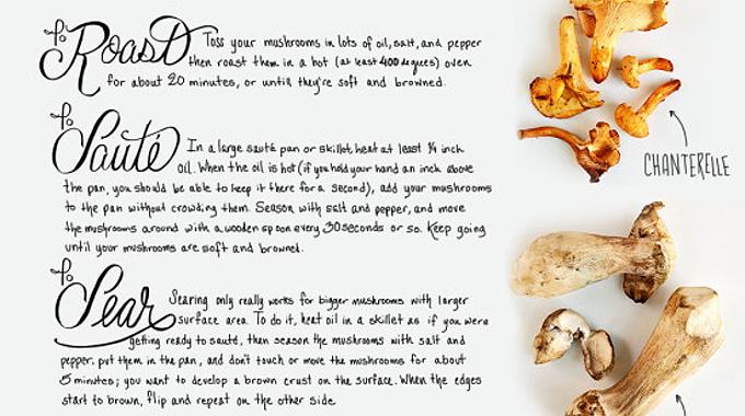 houby-infografika
