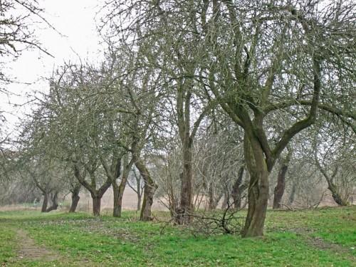 listopad stromy