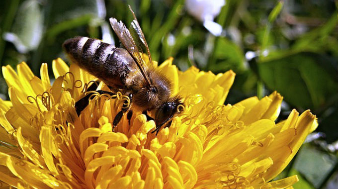 Náš Včelí Tým Hledá Obsahového Stratéga!