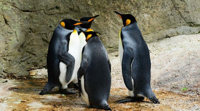 Penguin 2.0 – Další Vylepšení Google Algoritmu