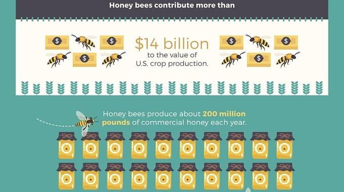 včely-a-vosy-infografika